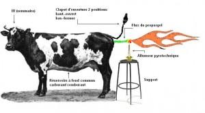 vache methane